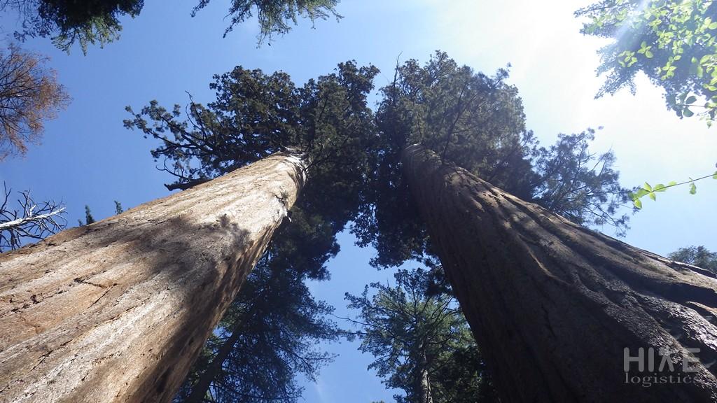 Calaveras Big Trees State Park, CA
